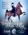 Blue Lilly