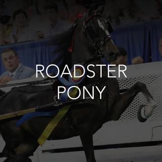 roadster pony