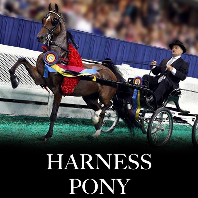 hackney harness pony