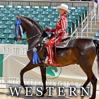 western saddlebred