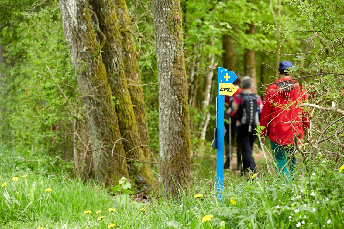 hiking trail Oesling