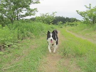 お散歩をすれば...(3)