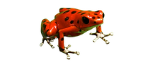22-221934_poison-dart-frog-png-free-down