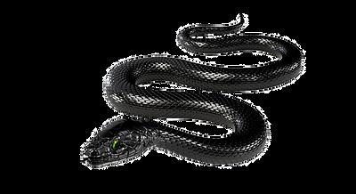 105-1052397_black-rat-snake-transparent_