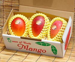 完熟マンゴー(3玉入り)