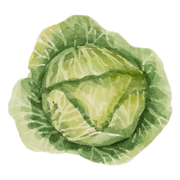 Iceberg salat