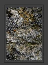 stone buch-18.jpg