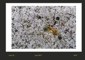 stone buch-28.jpg
