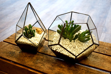 Plantes modernes