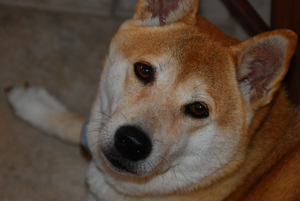 CLOE Rick's Dog.png