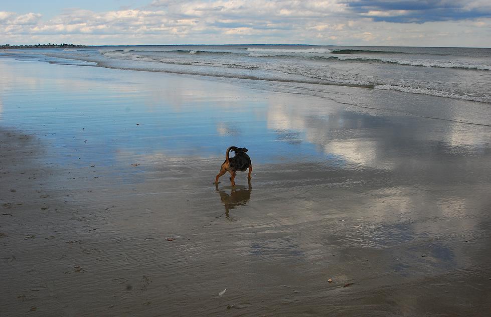 Mia DOG on Beach.png