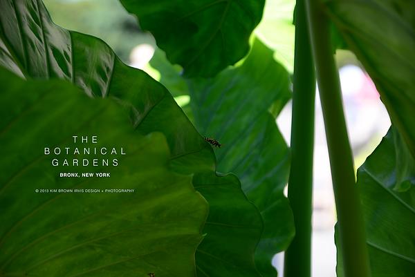 Bug + Leaf | Botanical Gardens.png