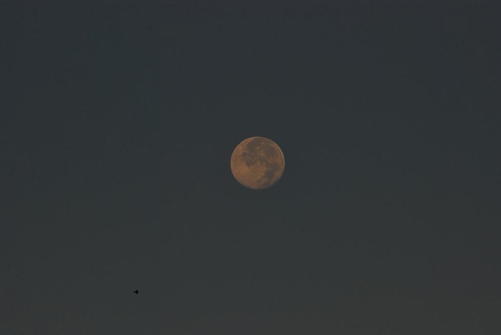 Sunrise Moon INWOOD.png