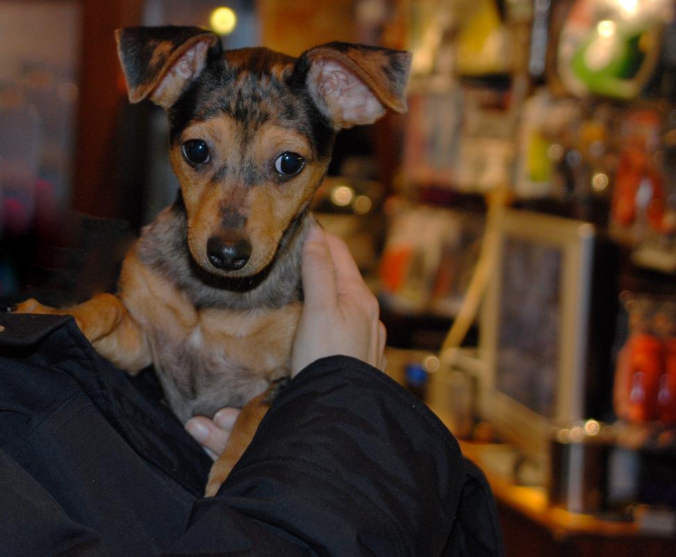 Fran+Mia Puppy.png