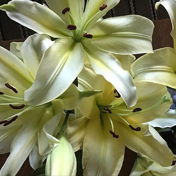 Store bought Lilies.jpg