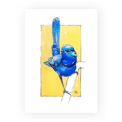 """Brilliant Blue Wren"""
