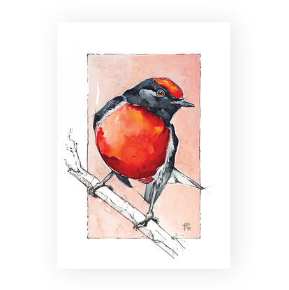 """Red Robin"""