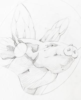 """The Pigfly Queen"""