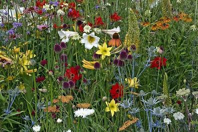 wild-garden-7-889x592.jpg