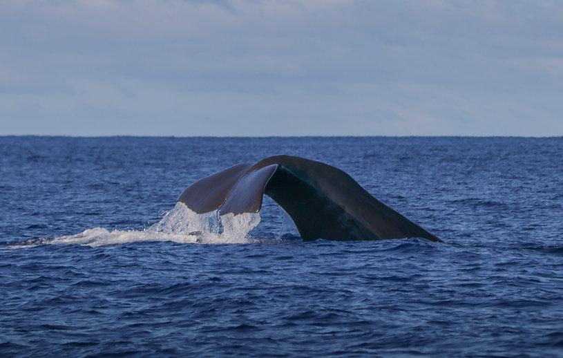 whale watchin