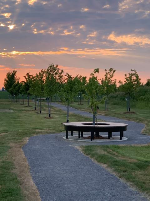 Arboretum - juin 2020