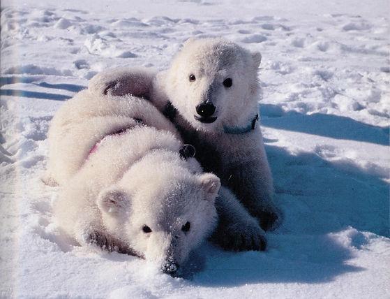 Klondike and Snow