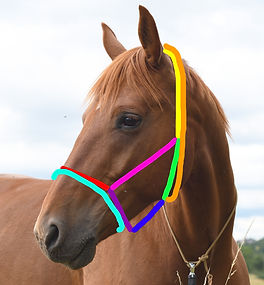 Taille_Cheval.jpg