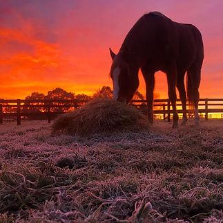 Sav sunrise.jpg