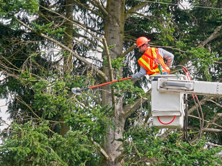 Tree Trimming Near Power Lines
