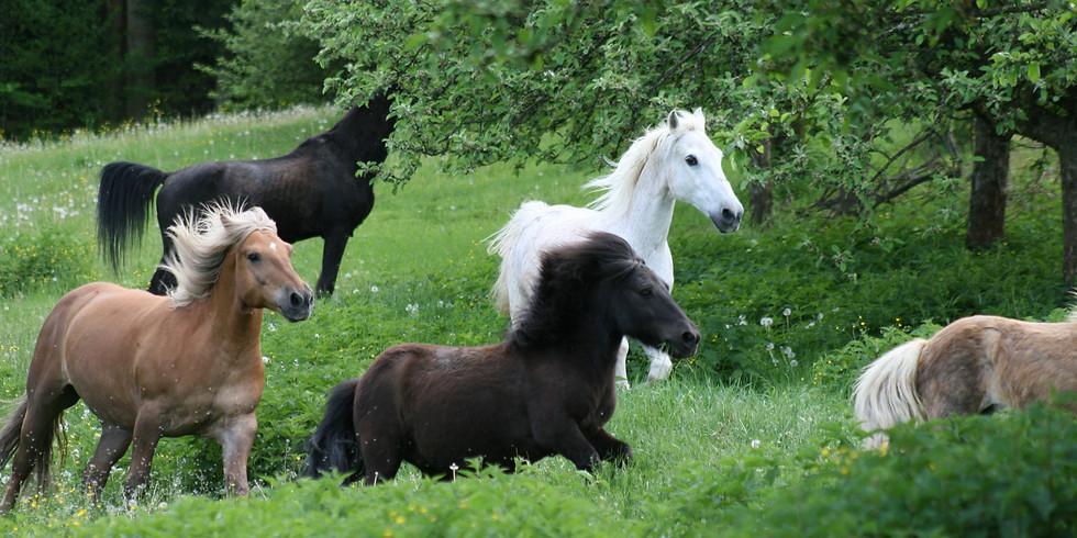 Authentische Kommunikation mit Pferden