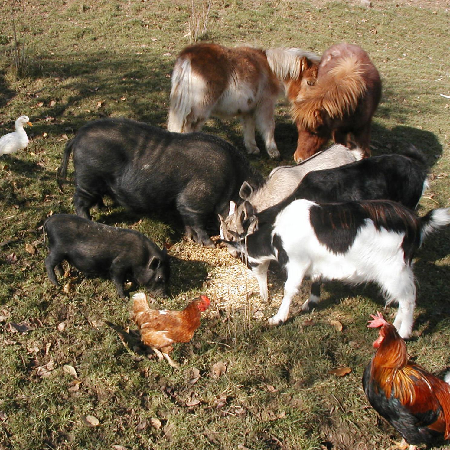 Tierischer Tag am Ponyhof