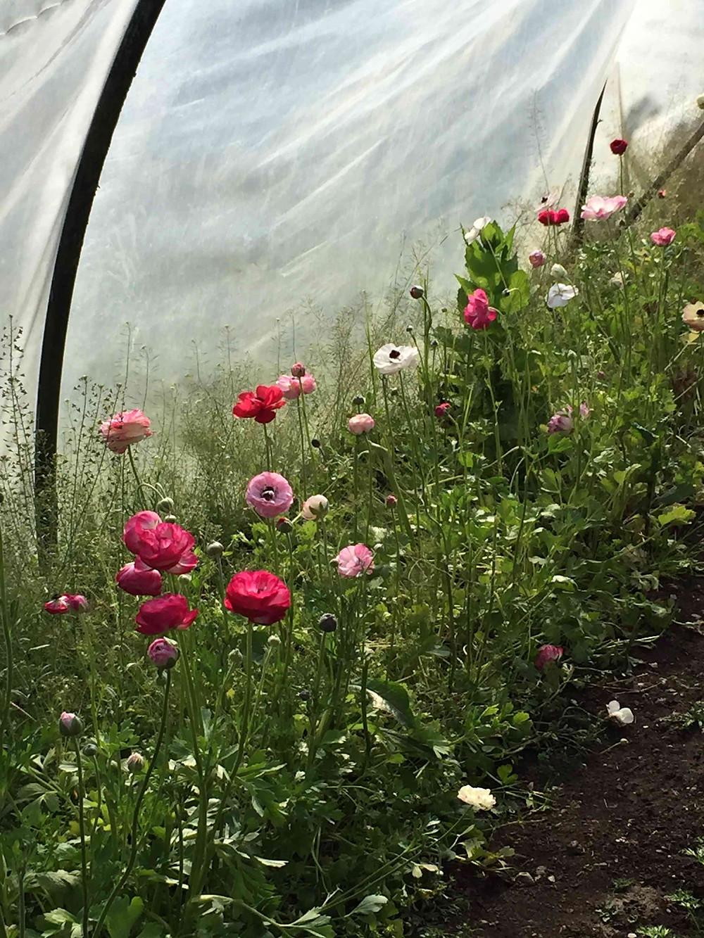 raspberry and basil tart + deans court's kitchen garden (tarte aux framboises et basilic potager de deans court sistersjunction