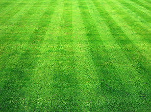 grass_texture241.jpg
