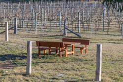 Vineyard sitting (1 of 1)