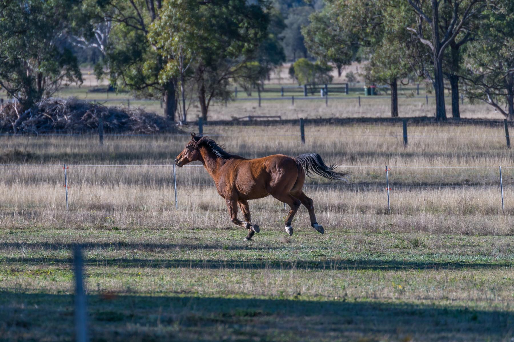 Running Horse (1 of 1)