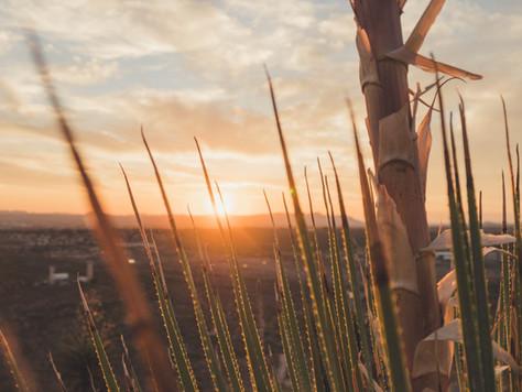 Božidar Brezinščak Bagola: Pčele i nevidljivo/Spomenka Štimec