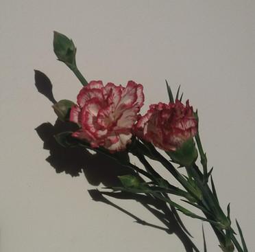 Serena Piccoli: For Alexandra