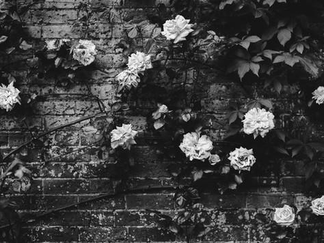 Weekly ZiNgers! Spectator in Silence / Curious Wallflower