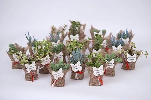 Martisor Plante Suculente