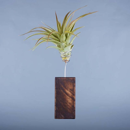 Deco Lemn Stejar