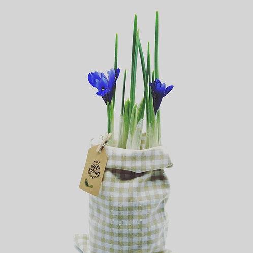 Flori de Iris la Saculet