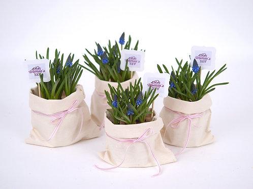 Flori Albastre In Sac cu Mesaj