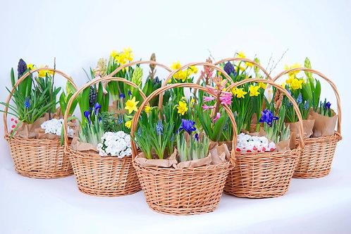 Cos cu Flori de Primavara in Saculeti