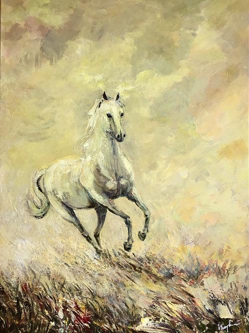 Cal sălbatic alergând