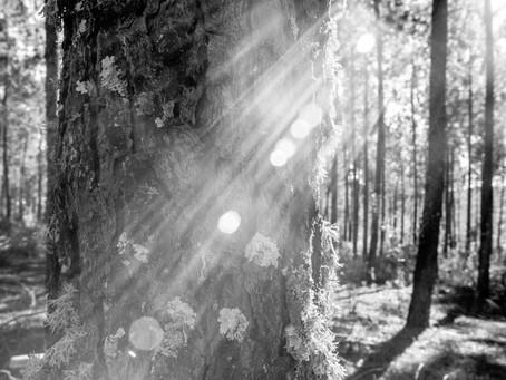 Claros del bosque. María Zambrano