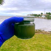 Dirty jar Water .JPG