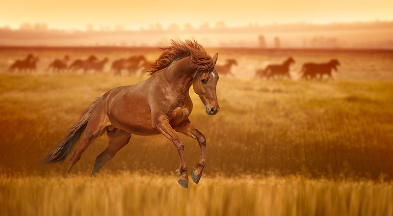 Red horse galloping jumps in the grass l