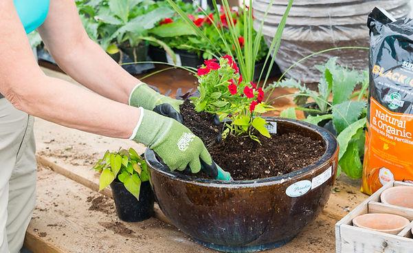 Customer creates a pot with plants from Four Seasons Nursery