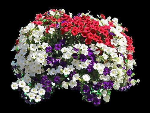 "14"" Mini Imperial Hanging Basket - Combo Petunias"