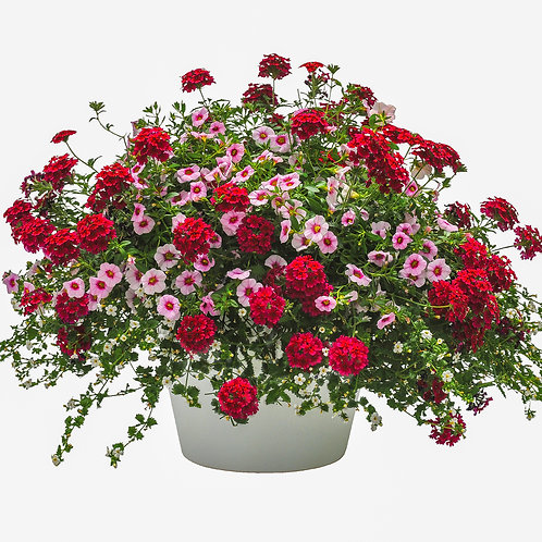 "18"" Crater Lake Hanging Basket - Trixi Combination"